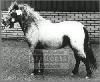 freddyvdysselhof90cm1991